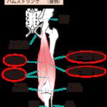 腰痛のストレッチ